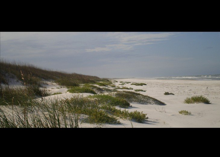 Anastasia State Park: 4 1/2 miles of undeveloped beach