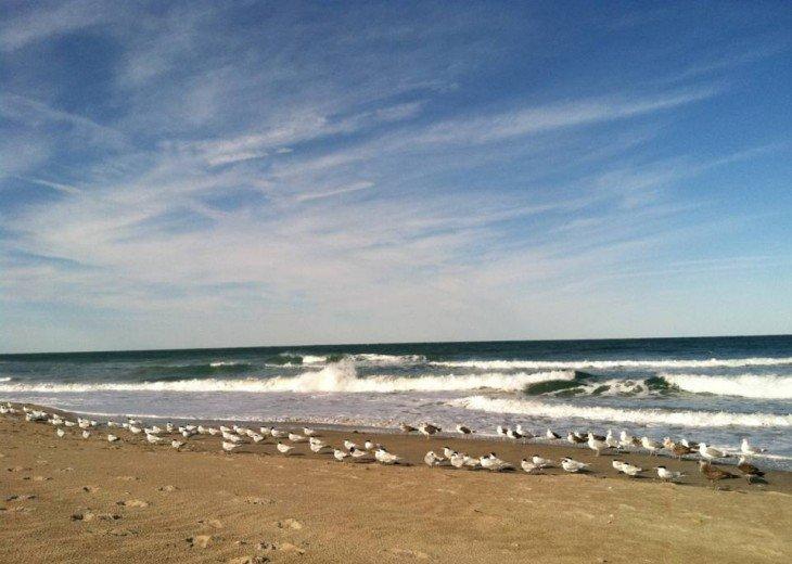 Escape to Oceanfront North Hutchinson Island #23