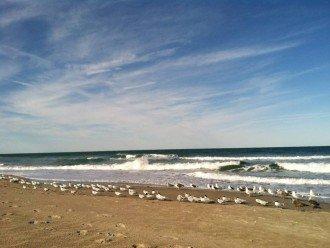 Escape to Oceanfront North Hutchinson Island #1