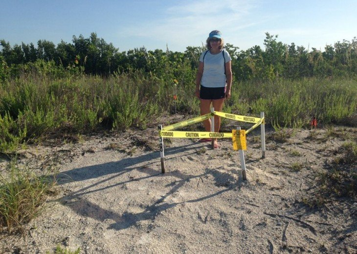 Sea turtle nest (protected - fines will be heavy if you disturb the nest.)