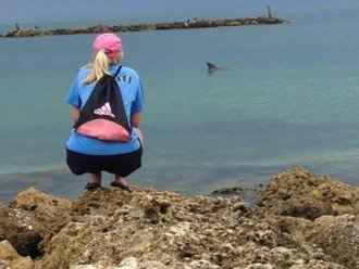 Dolphin watching.