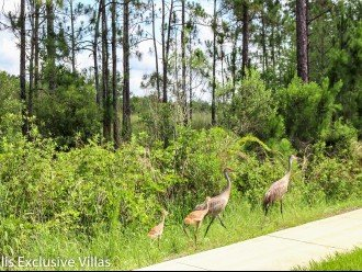 Watersong community, Florida, local wild life