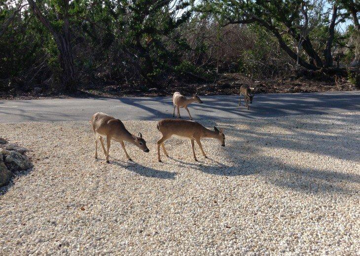 Visiting neighbors