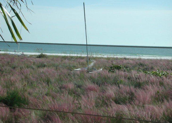 October sea grass bloom.