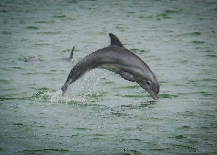 Enjoy Morning Coffee Or Drinks At Night Watching The Dolphins In The Bay
