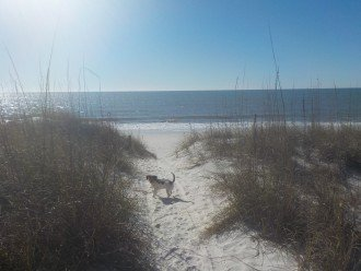 CapeSide Breeze, 1.32 minute walk to Gulf, Pet friendly #1