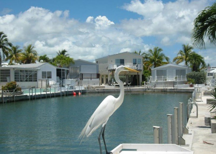 Blue Adventure Florida Keys Waterfront! #12