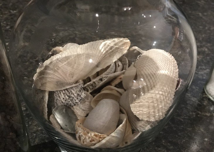 Shells from the beach.