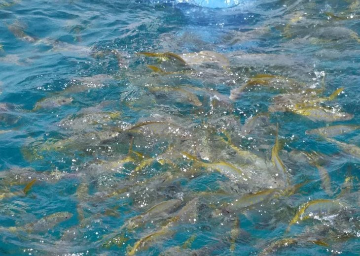 Looe Key reef snorkeling, see plenty of yellowtail fish! About 15 minutes