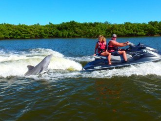 Enjoy getting up close and personal with Dolphin from a Wave Runner Excursion!