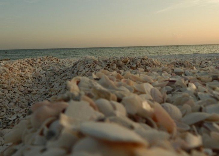 Go Shelling Along Tigertail Beach - A Great Place to Find Sand Dollars