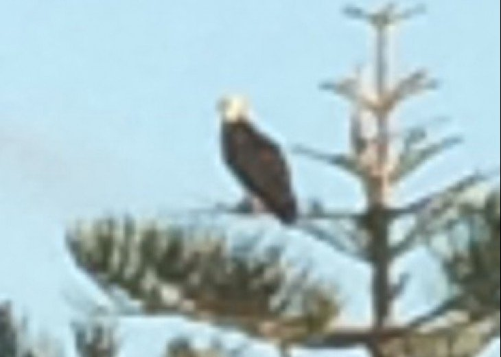 Plenty of wildlife, from ospreys to bald eagles!