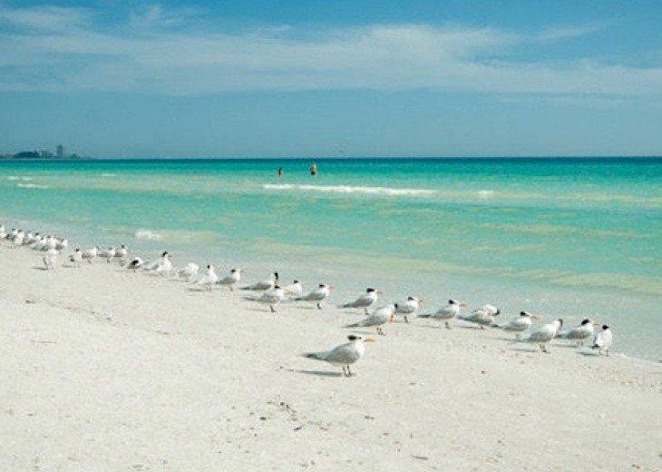 Beautiful white sands of Siesta Key Main Beach