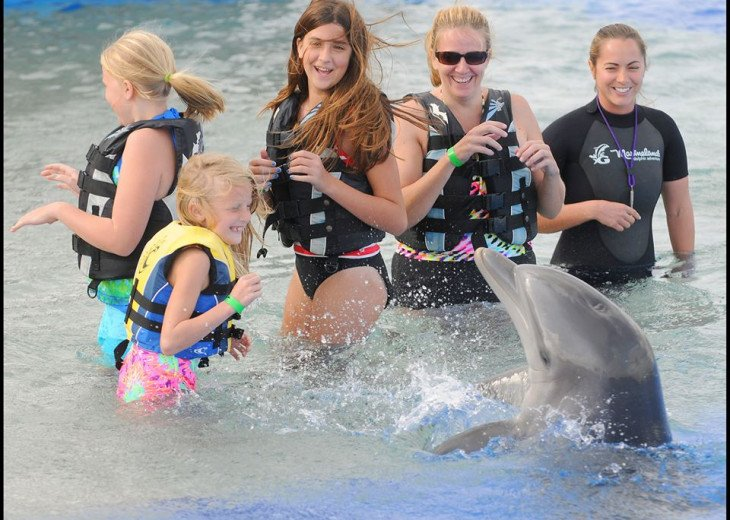 Visit Marine Land - just 45 minutes north. Swim with the dolphins!