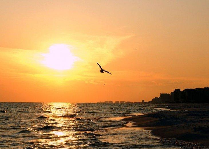 Amazing Beach Views * Budget Friendly * FREE beach service & WiFi #28