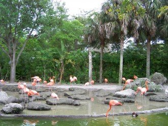 Pink Flamingos at the beautiful Miami Metro Zoo