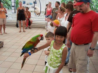Entertaining Parrot Show at Theater of the Sea