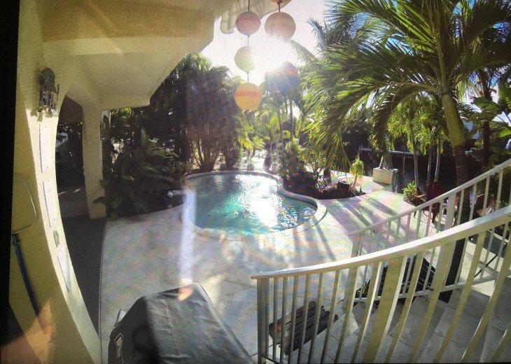 Paradise Palms #8