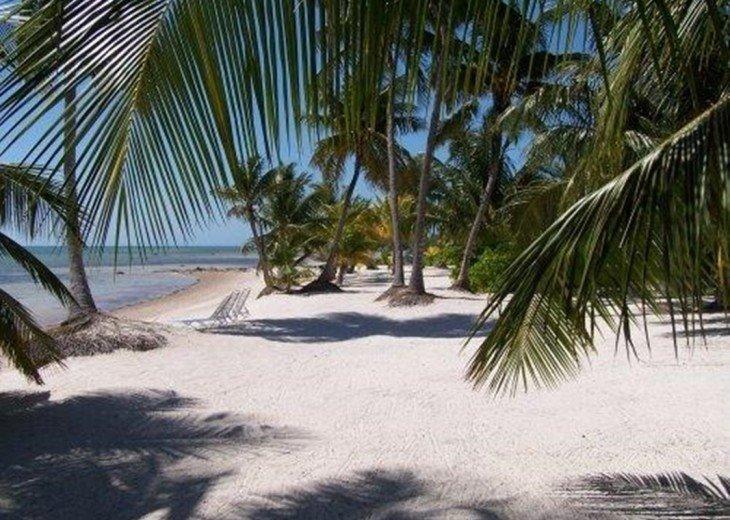 Palm Villa #5