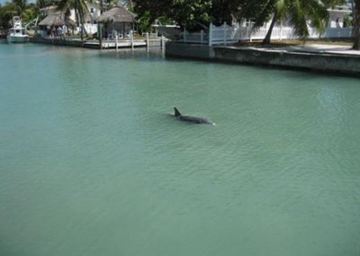 Dolphin Behind Our House