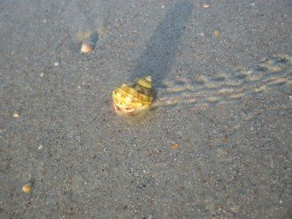a friend trailing around at Crescent Beach - Beachers Lodge_229