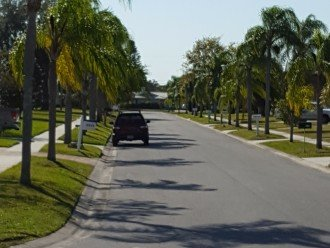 Quiet palm-lined street and neighborhood.