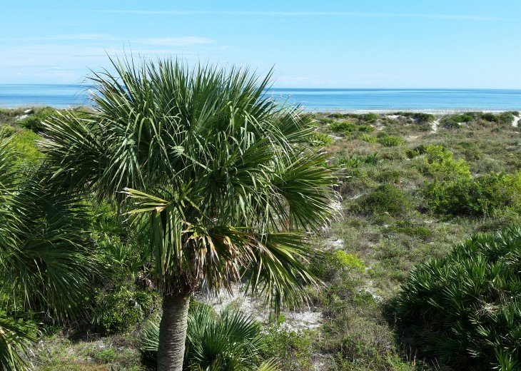 OCEANFRONT RENTAL HOME ~ St. Augustine Beach ~ 4BR-3BA NO SERVICE FEES! #7