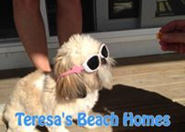 Pet Friendly Beaches!
