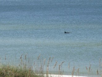 Dolphins are just some of the beautiful sites along our shoreline