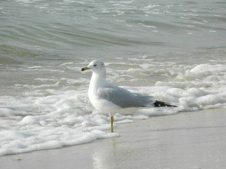 Shorebirds and other wildlife are plentiful at the Cape