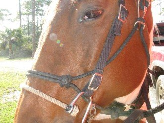 Horseback riding is just one of the many adventures you can have @