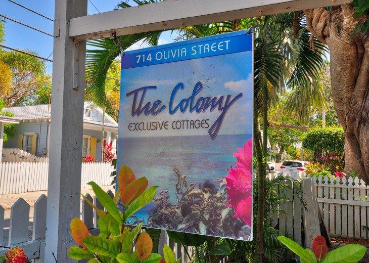 Colony Calypso #19