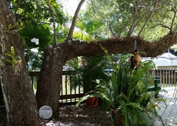 """""""Tropical Tree House"""" 6151 Midnight Pass Rd. #6"""