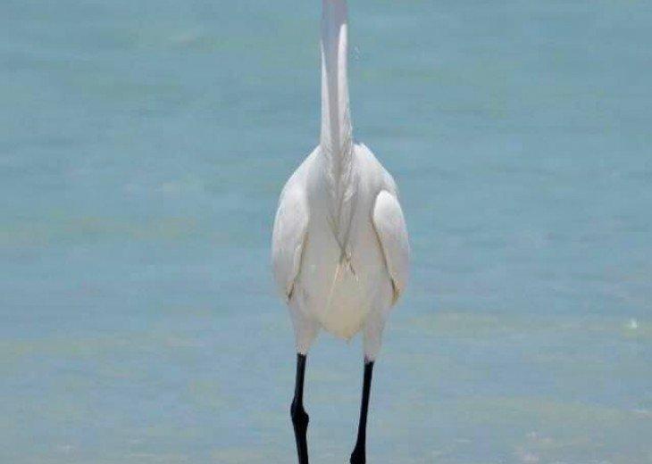 ST AUGUSTINE BEACH DIRECT OCEANFRONT BEACH HOUSE SLPS 2-8 or 12 fr $199 NIGHT #31