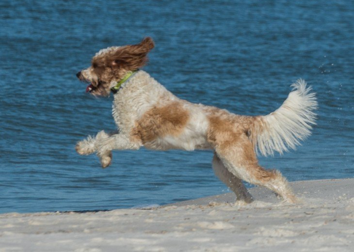 DIRECT BEACH FRONT - 3 Beach Front Decks - Lot's of Extra's - Pet Friendly #33