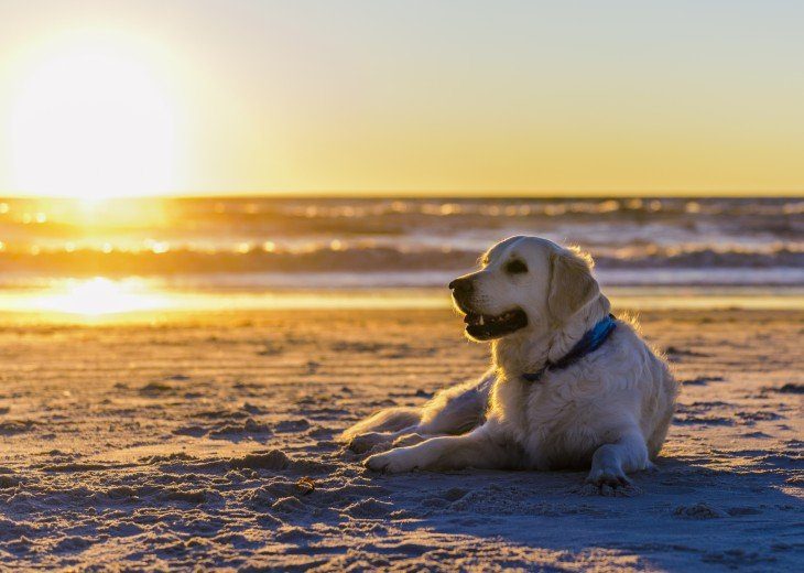 DIRECT BEACH FRONT - 3 Beach Front Decks - Lot's of Extra's - Pet Friendly #46