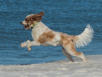 DIRECT BEACH FRONT - 3 Beach Front Decks - Lot's of Extra's - Pet Friendly #1