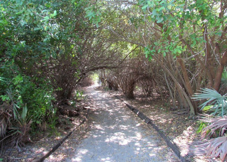 Walking Path to a Secluded Beach Area