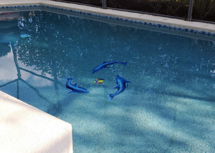 """Pool with """"Swimming"""" Dolphins"""