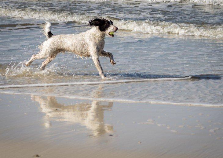Dogs Love The Cape