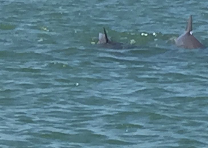 Dolphins behind house