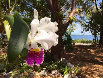 Orchids abound on property