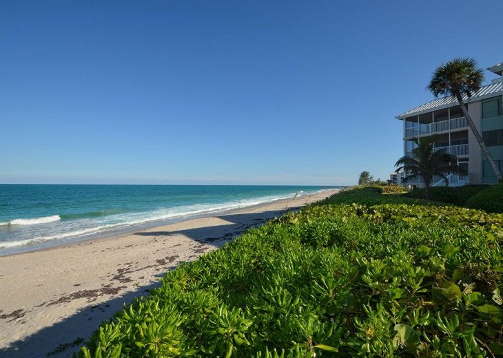 Sea Oaks Oceanfront Condo! #2