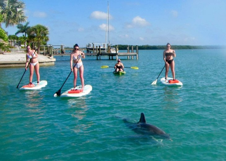 Arrange a paddle session to see the wildlife