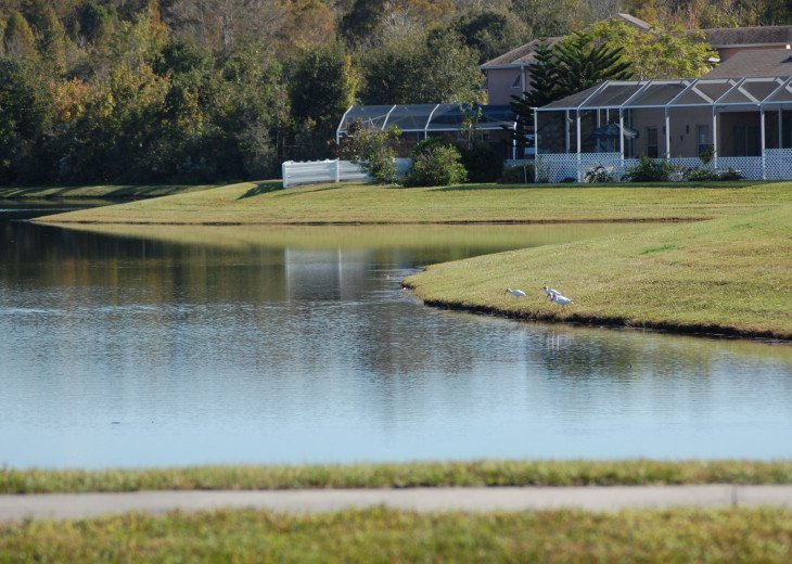Florida Lake VILLA #5 #36