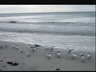 Our friendly seagulls