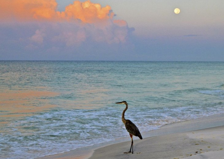 This Listing is no longer Available - GULF FRONT HOME 87 ft PRIVATE BEACH #24