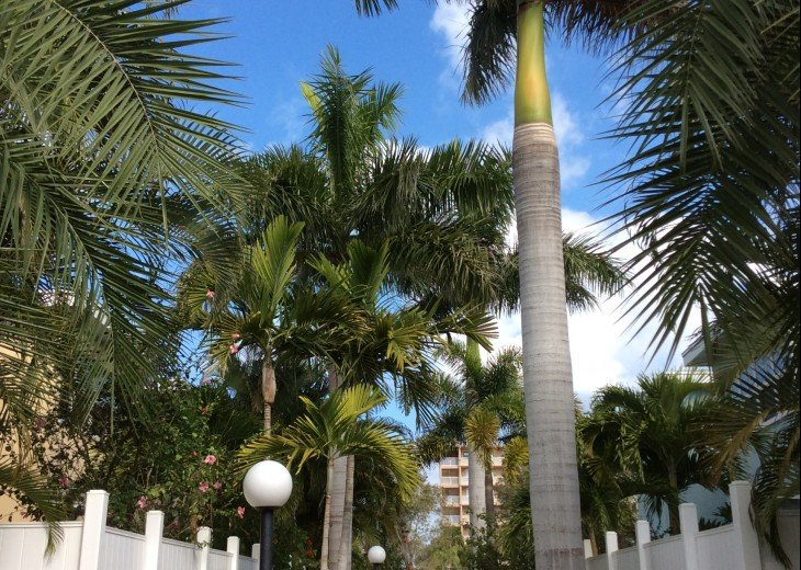 Welcome to Your Florida Home! Barefoot Beach Resort. Updated Unit New Furniture #32