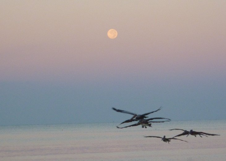 Rare 'moon set' into the Gulf of Mexico!