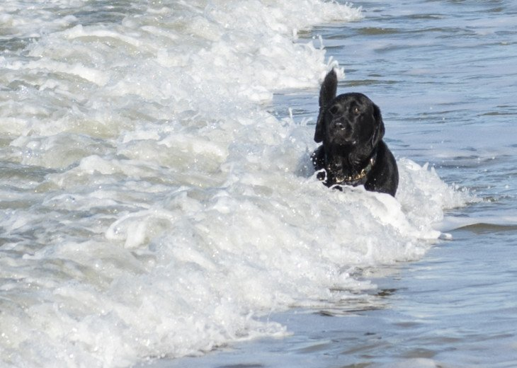 Regularly Voted #1 Pet Friendly Beach in America
